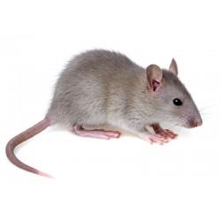 Aliment pour rat 14mm