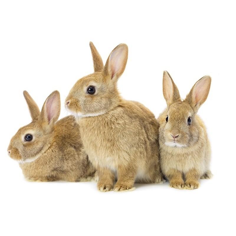 Granul s lapin clapier st laurent - Photo de lapin a imprimer ...