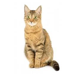 Cat food - Granfesta