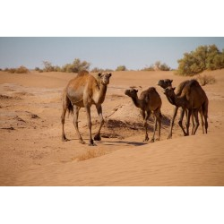 LUNDI - Granulado para Camelidos 8 mm