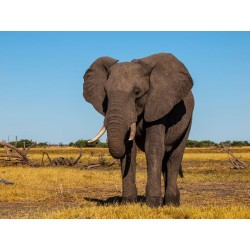 LUNDI - Granulado para Elefantes