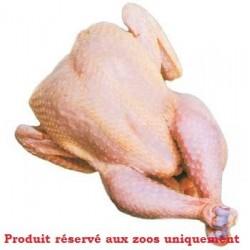 Pollo entero limpio (sin plumas y sin vísceras)