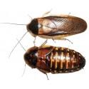 Insectos Vivos (NO DISPONIBLES)