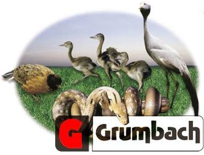 grumbach.jpg